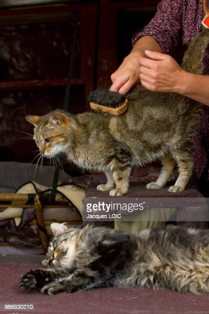france, cats in a refuge for animals (spa). - beroepen met dieren stockfoto's en -beelden