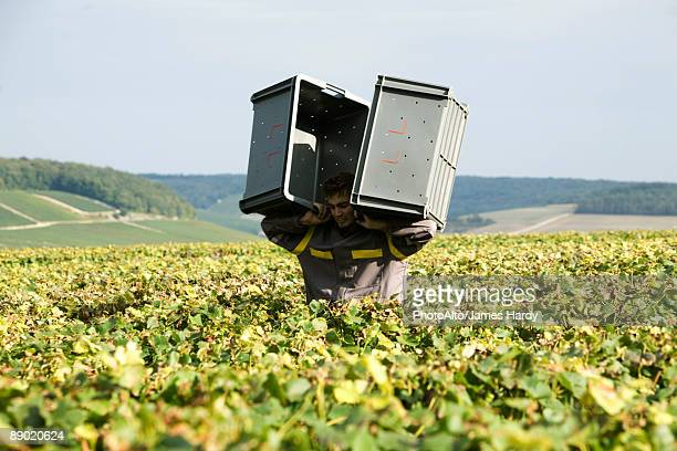 France, Champagne-Ardenne, Aube, man carrying plastic bins through vineyard