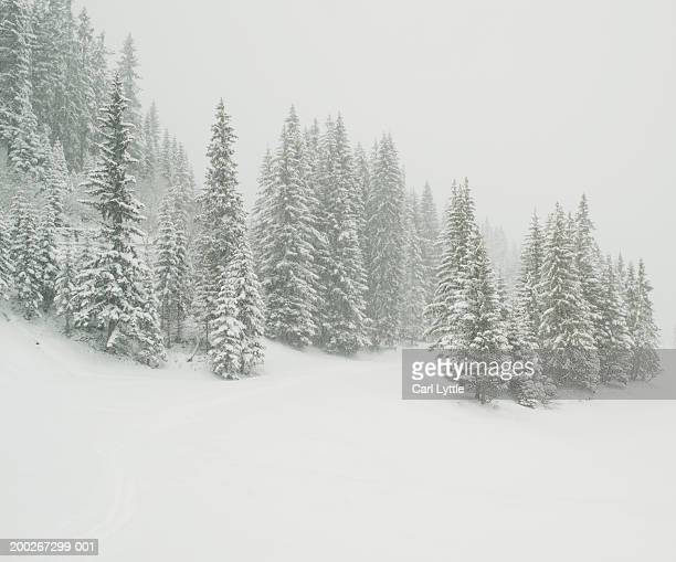 France, Courchevel, trees in snow covered landscape