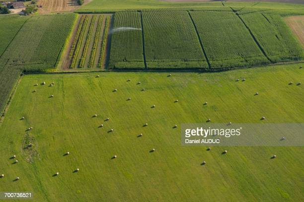 France, Dordogne, aerial view of a green field and haystacks in the foreground, a cornfield in the background