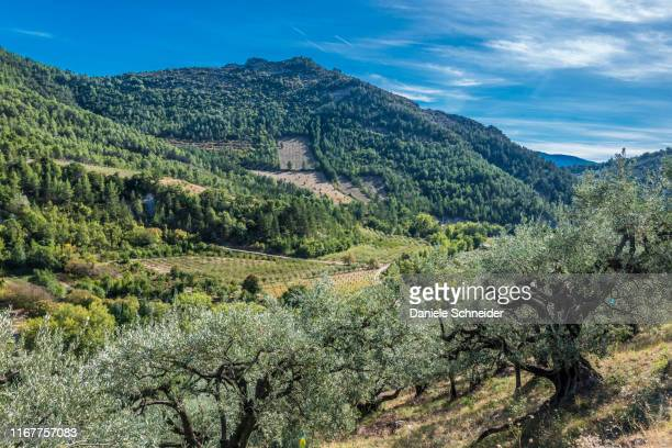 france, drome, the provencal baronnies regional natural park, century-old olive trees, vines, cherry, apricot trees - provence alpes cote d'azur stock pictures, royalty-free photos & images