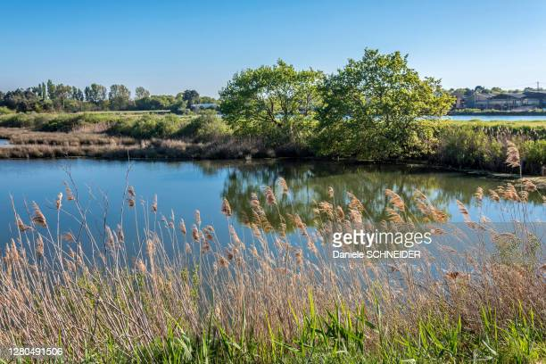 france, gironde, arcchon bay, salt marshes of the teste at port du rocher - marsh stock pictures, royalty-free photos & images