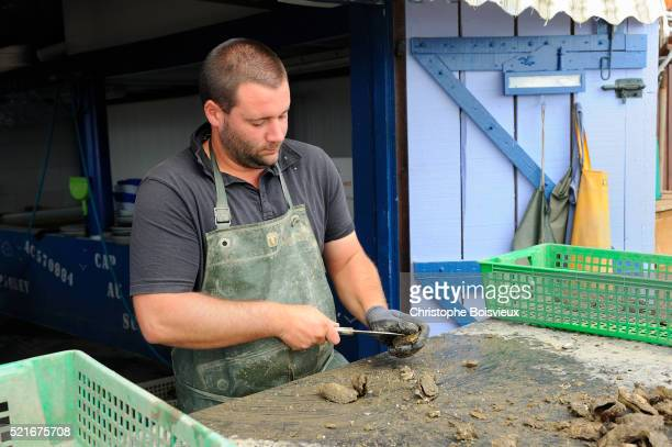 France, Gironde, Bassin d'Arcachon, Grand Piquey, Oyster-farmer selecting oysters