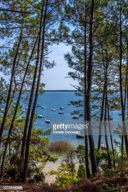 france, gironde, medoc bleu, carcans lake in maubuisson - gironde stock pictures, royalty-free photos & images