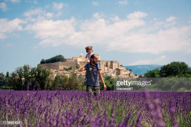 France, Grignan, father carrying little daughter on his shoulders through lavender field
