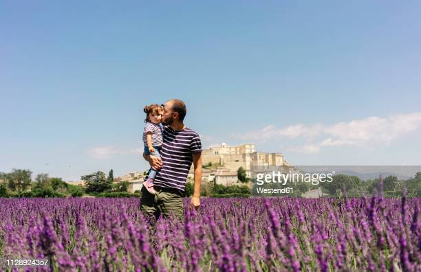 France, Grignan, father kissing his little daughter in lavender field