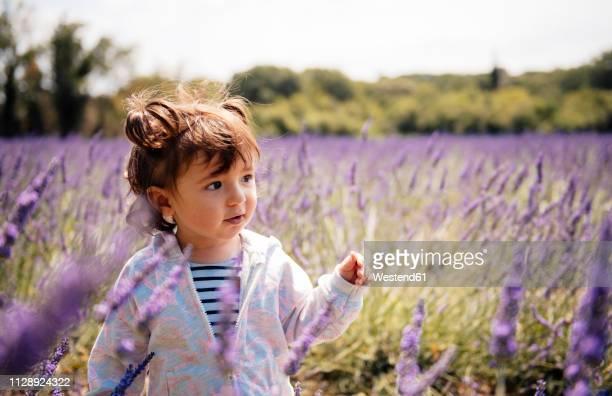 France, Grignan, portrait of baby girl in lavender field