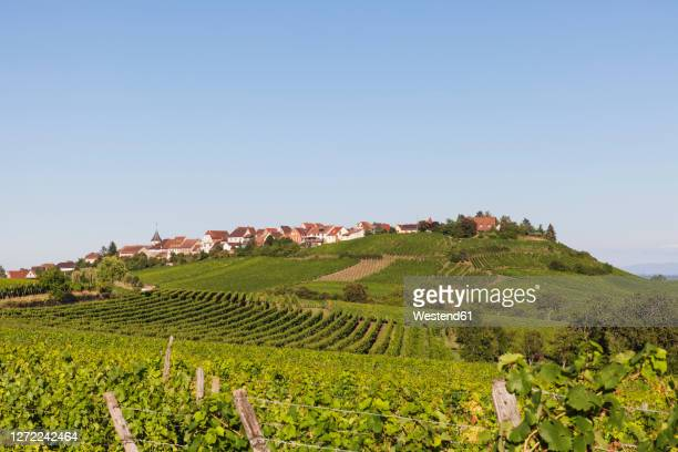 france, haut-rhin, riquewihr, clear sky over countryside village and surrounding vineyards in summer - haut rhin stock pictures, royalty-free photos & images