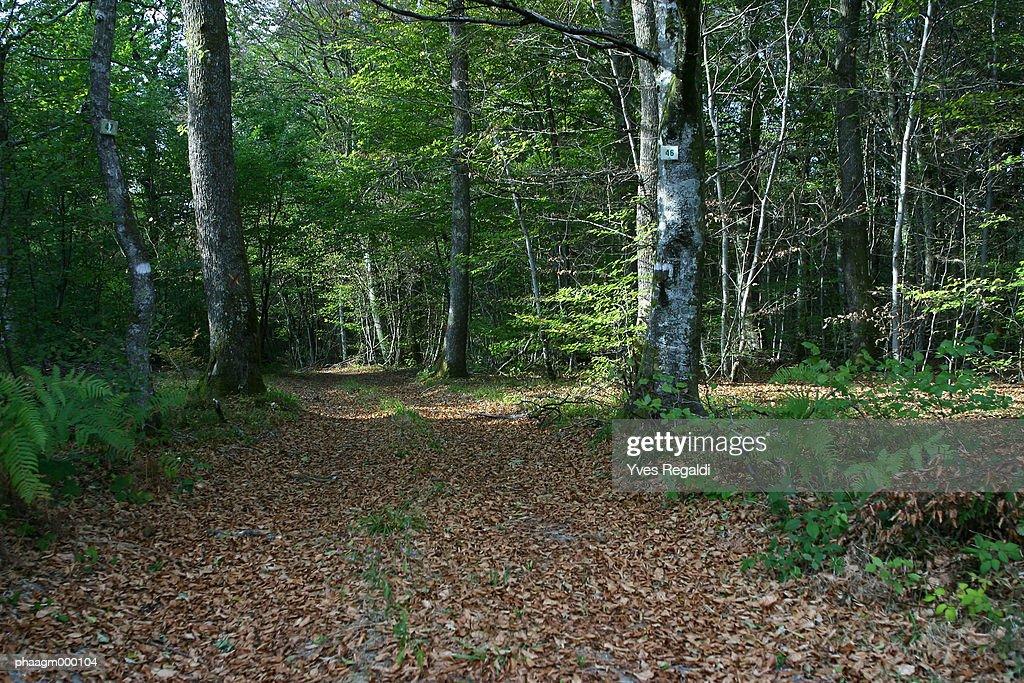 France, Jura, Chaux Forest : Stockfoto