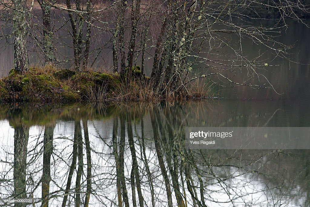 France, Jura, trees and pond in winter : Stockfoto