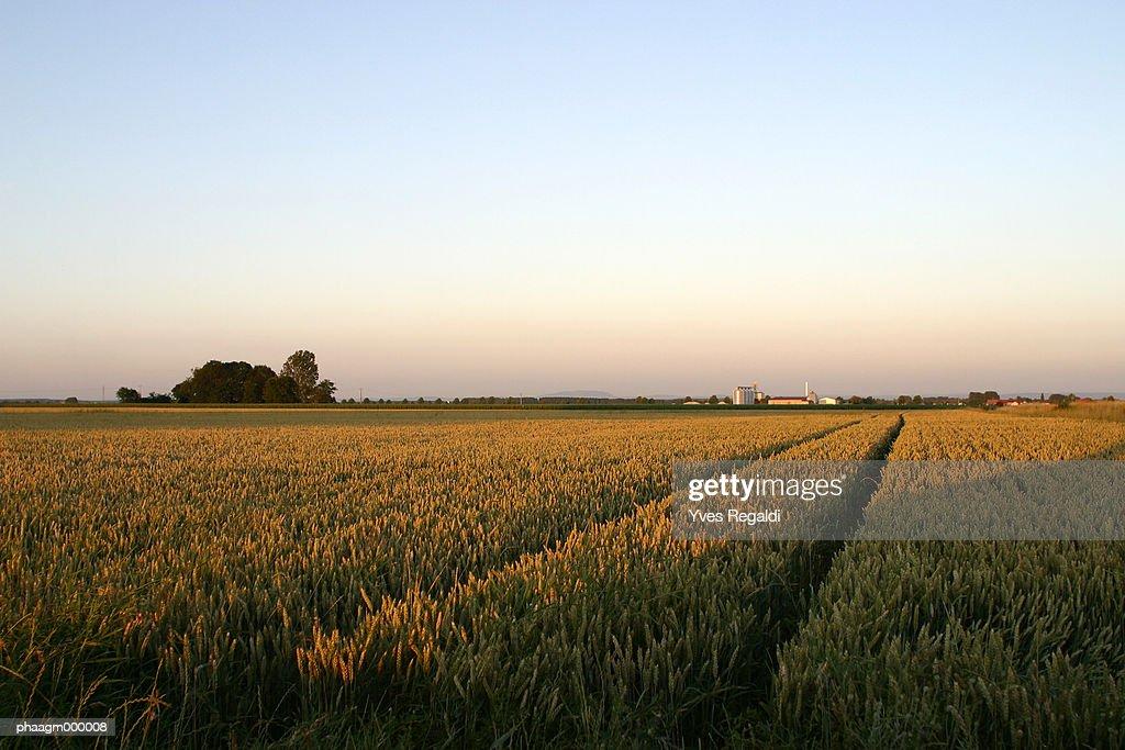 France, Jura, wheat field : Stockfoto