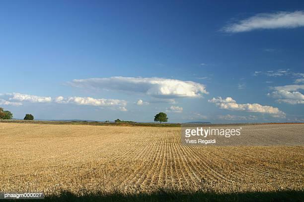 France, Jura, wheat field