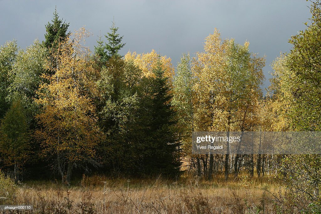 France, Jura, woods in autumn : Stockfoto