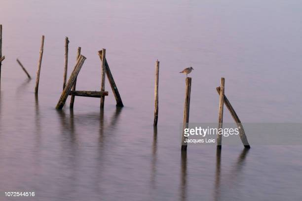 france, mouth of the loire, bird perched on a picket. - estuary stock pictures, royalty-free photos & images