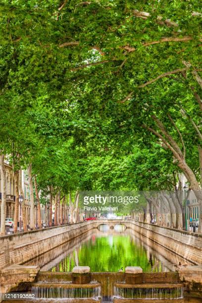france - nimes, quai de la fontaine - languedoc rousillon stock pictures, royalty-free photos & images