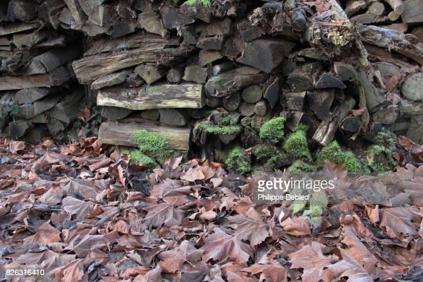 France, Nord-Pas-de-Calais, Piles of logs and dead leaves