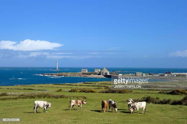 France, Normandie, Manche, presqu'ile du Cotentin, Cap de La Hague, environs de Goury.