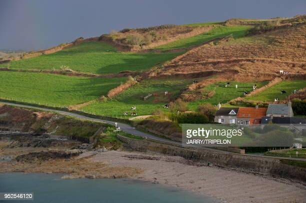 France Normandie Manche presqu'ile du Cotentin Cap de La Hague