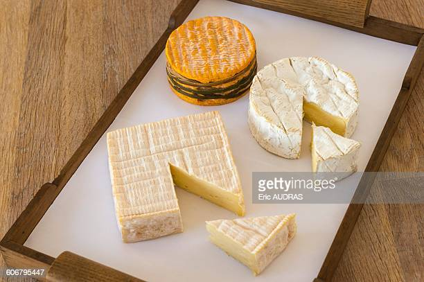 France, Normandy, cheeseboard with three typical norman cheeses
