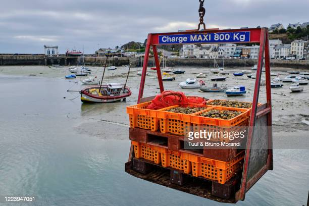 france, normandy, manche department, granville, whelk fishing - france stock pictures, royalty-free photos & images