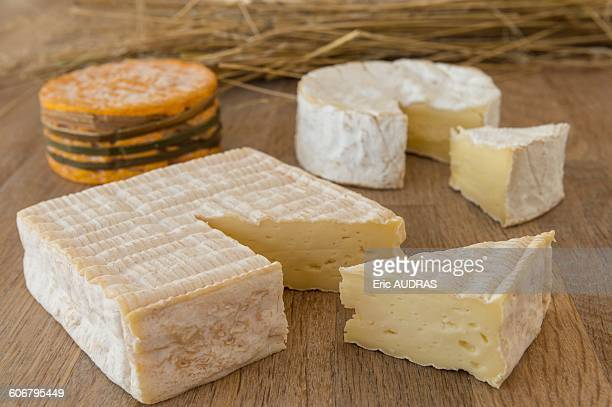 France, Normandy, three typical norman cheeses on cheeseboard
