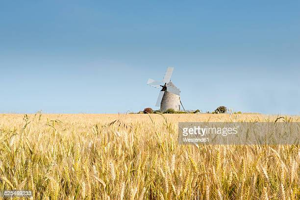 France, Normandy, Wheat field, Triticum, Wind mill