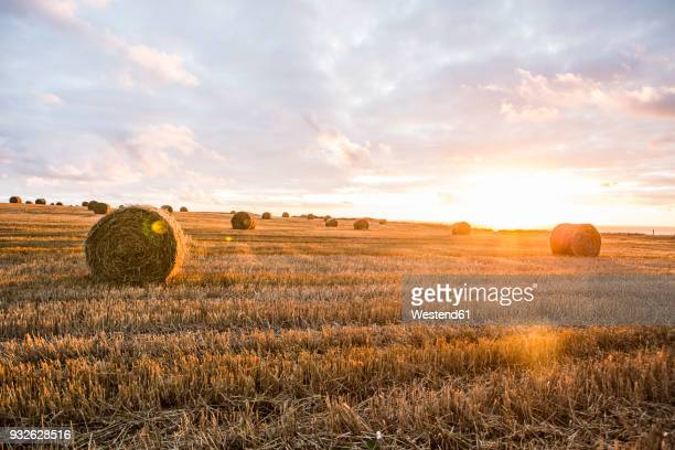 France, Normandy, Yport, straw bales on field at sunset