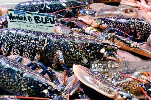 france, north-western france, brittany, concarneau, inside of the covered market, particularly well-assorted fishery, blue lobster - concarneau stock-fotos und bilder