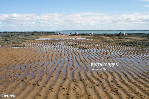 France, North-Western France, La Plaine-sur-Mer, Port Giraud, gathering seafood by hand