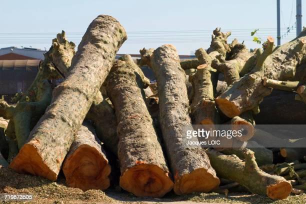 France, North-Western France, Nantes, Ile de Nantes, trunks of felled plane-trees