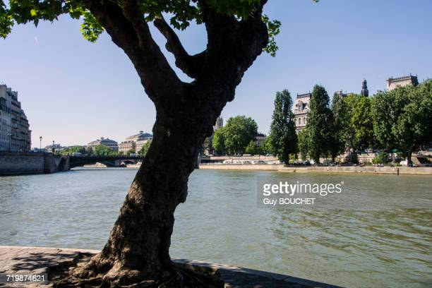 france, paris 4 eme, ile st louis at the confluence of the seine with the hotel de ville - quayside stock pictures, royalty-free photos & images