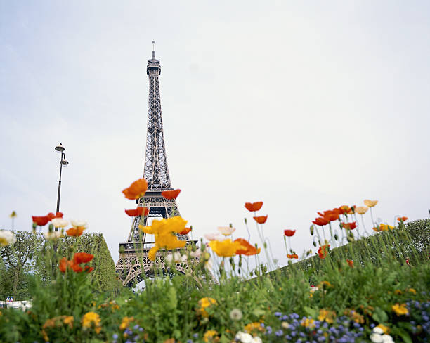 France, Paris, Eiffel Tower, poppies in foreground, low angle view