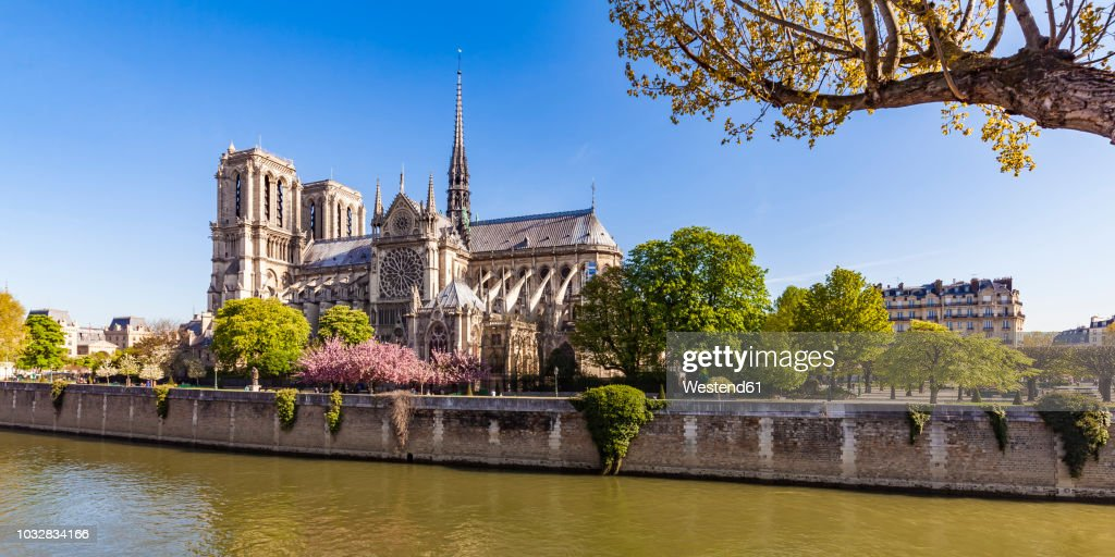 France, Paris, Notre Dame Cathedral at cherry blossom : Stock Photo