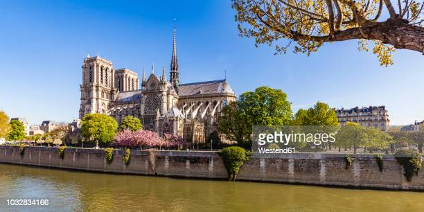 france, paris, notre dame cathedral at cherry blossom - notre dame de paris fotografías e imágenes de stock