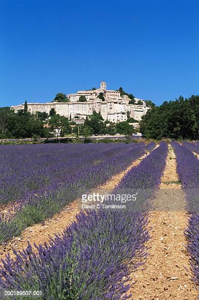 france, provence, banon, lavender field by village - アルプドオートプロバンス県 ストックフォトと画像