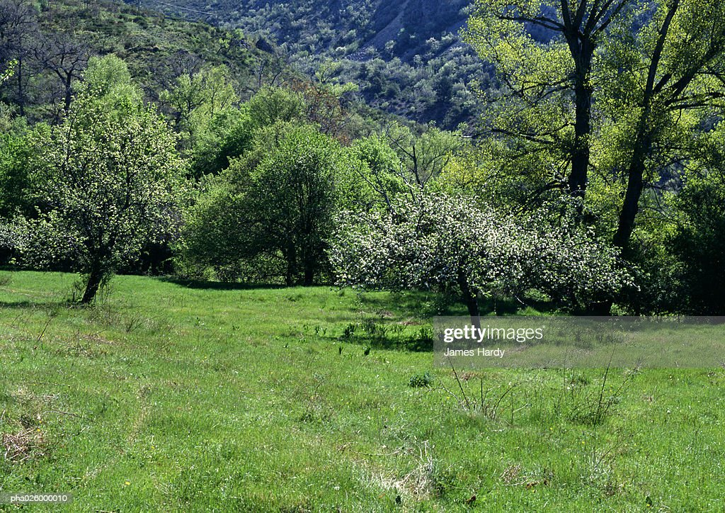France, Provence, field with trees in background. : Stock Photo