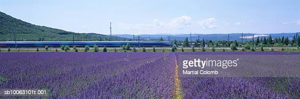 france, provence, tgv high speed train and lavender fields (blurred motion) - tgv photos et images de collection