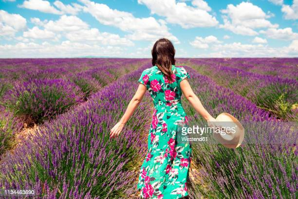 france, provence, valensole plateau, back view of woman wearing summer dress standing in lavender field - サンドレス ストックフォトと画像