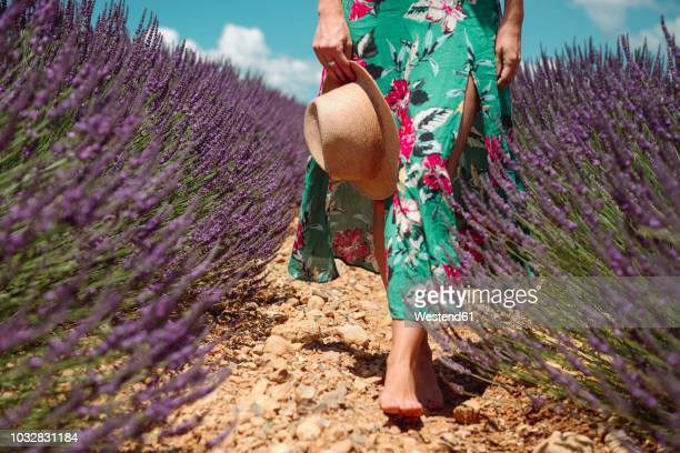 France, Provence, Valensole plateau, Barefoot woman walking among lavender fields in the summer