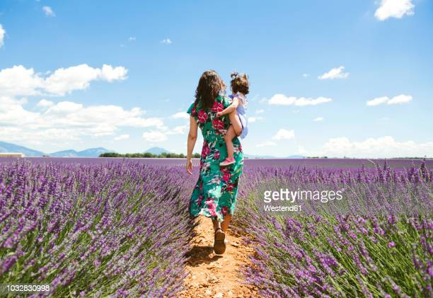 france, provence, valensole plateau, mother and daughter walking among lavender fields in the summer - mujer de espaldas en paisaje fotografías e imágenes de stock