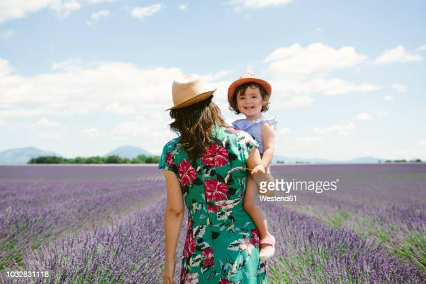 france, provence, valensole plateau, mother and daughter walking among lavender fields in the summer - purple dress stock pictures, royalty-free photos & images
