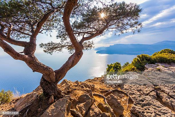 France, Provence-Alpes-Cote dAzur, Bouches-du-Rhone, Mediterranean coast, near La Ciotat and Cassis, Corniche des Cretes, Tree against the sun