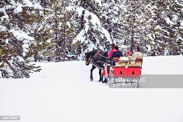 france, pyrenees, ariege, family carriage ride in the forest - アリエージュ ストックフォトと画像