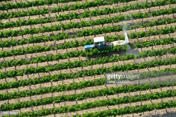France, Rhone-Alpes, Drome, Grignan, Vineyard, aerial view
