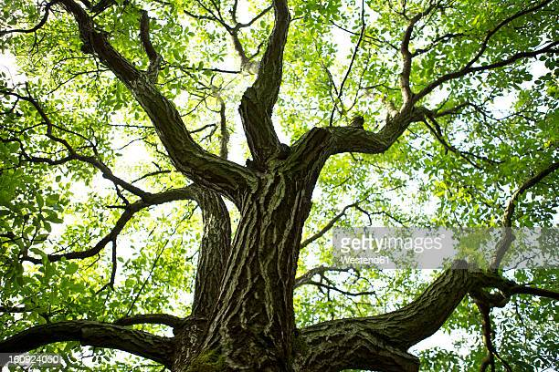 france, st. romans, plantation of walnut trees - walnut stock pictures, royalty-free photos & images