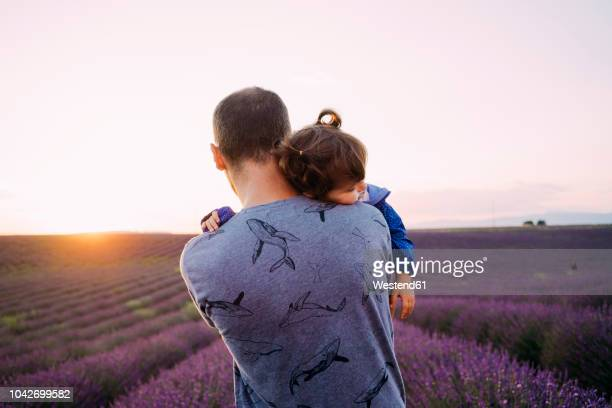 france, valensole, back view of father holding his little daughter in front of lavender field at sunset - purple shirt stock photos and pictures