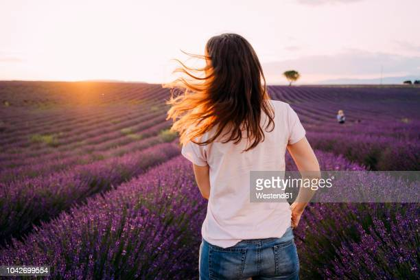 france, valensole, back view of woman standing in front of lavender field at sunset - lavender color ストックフォトと画像