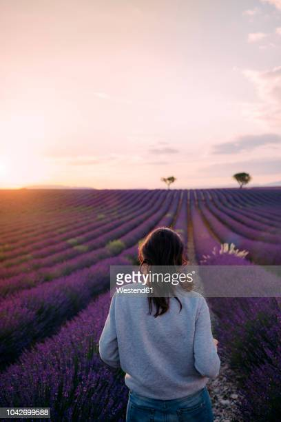 france, valensole, back view of woman standing in front of lavender field enjoying sunset - front view photos et images de collection