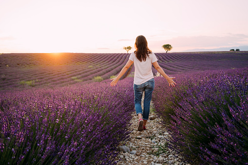 France, Valensole, back view of woman walking between blossoms of lavender field at sunset - gettyimageskorea