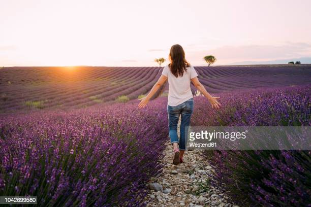 france, valensole, back view of woman walking between blossoms of lavender field at sunset - mujer de espaldas en paisaje fotografías e imágenes de stock